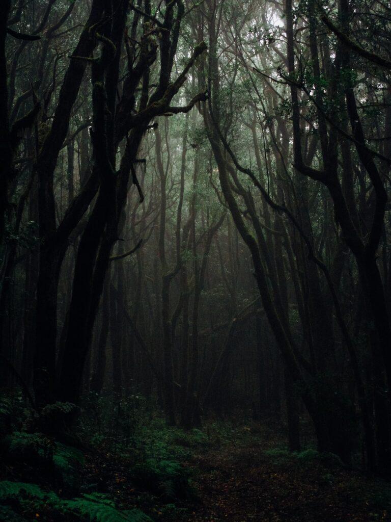 Темная природа обои